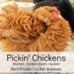 Pickin' Chickens!!!