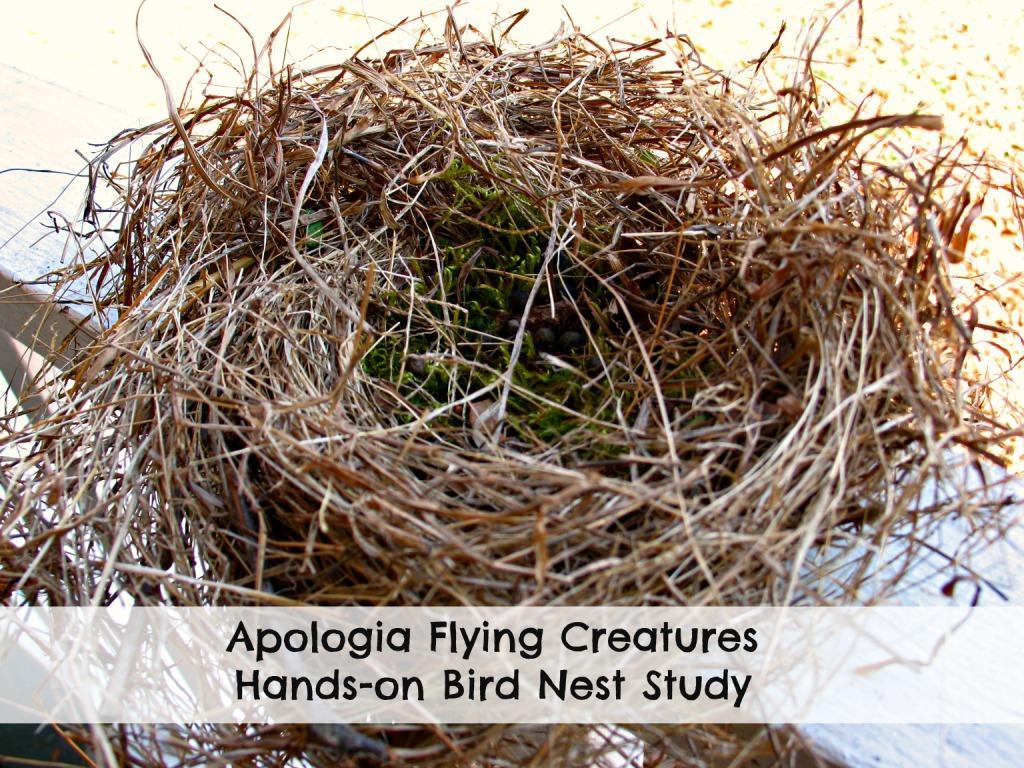 Bird Nest Study
