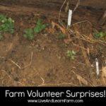 Farm Volunteer Surprises!