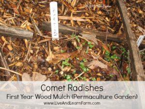 Comet Radish Perma-culture Garden