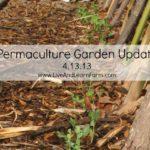 Permaculture Garden Update