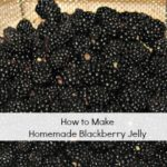How to Make Homemade Blackberry Jelly