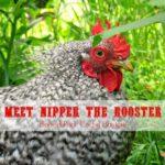 Meet Nipper and Cuddles