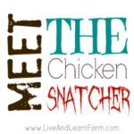Meet the Chicken Snatcher