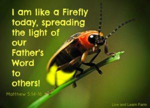 Like a Firefly