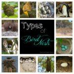 Bird Nests Study