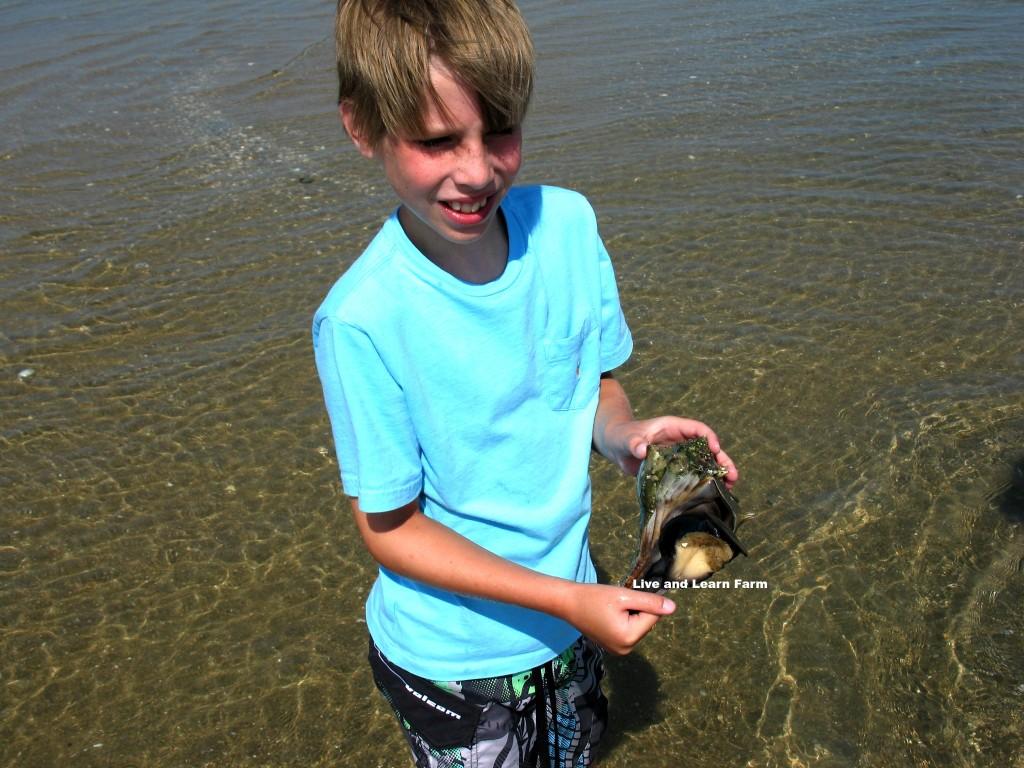 Gage Crab 2
